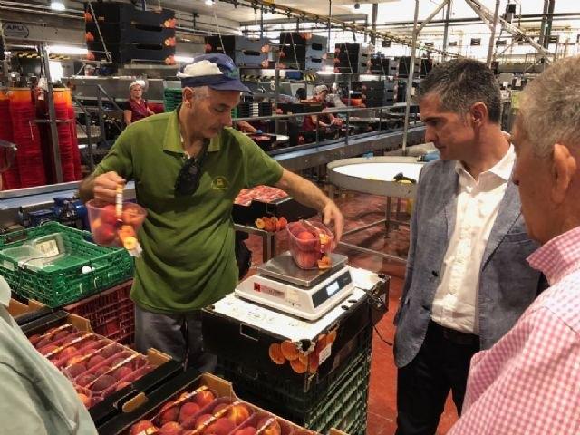 Las cooperativas de cítricos y frutas de la Región aumentan su producción de media un 10 por ciento en lo que llevamos de año - 2, Foto 2
