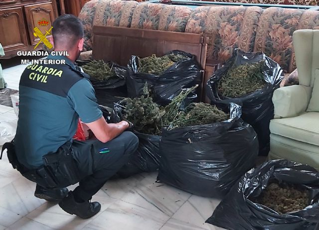 The Civil Guard dismantles an indoor marijuana greenhouse in an antique warehouse in Totana