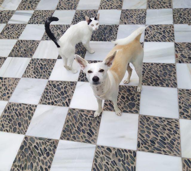 El Ayuntamiento de Puerto Lumbreras suscribe un convenio para la recogida y defensa de los animales de compañía - 1, Foto 1