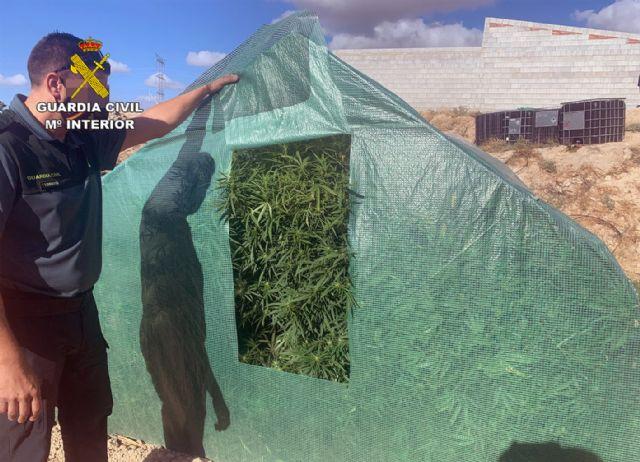 La Guardia Civil desmantela dos plantaciones de marihuana en Abanilla - 1, Foto 1