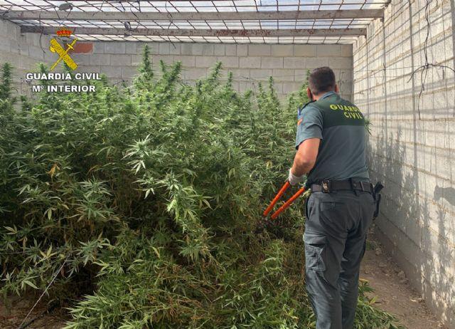 La Guardia Civil desmantela dos plantaciones de marihuana en Abanilla - 3, Foto 3