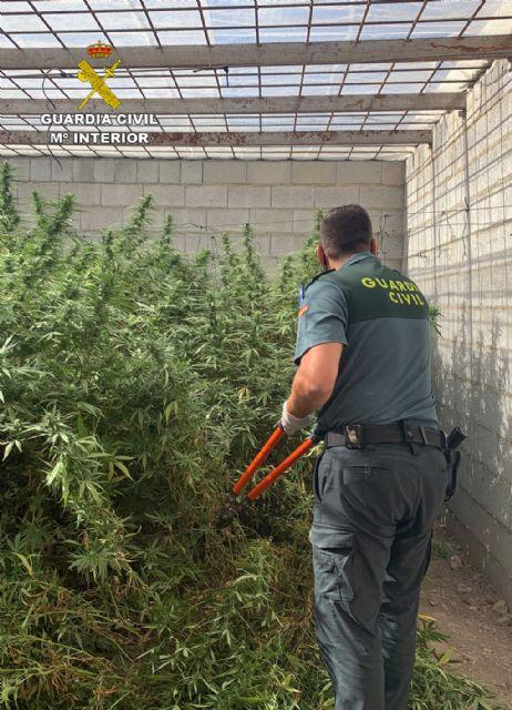 La Guardia Civil desmantela dos plantaciones de marihuana en Abanilla - 4, Foto 4
