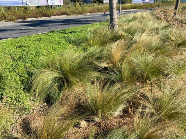El Ayuntamiento aumenta la biodiversidad urbana y mejora la calidad ambiental - 4, Foto 4