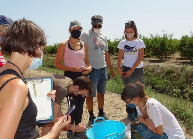Preocupación por la situación de la anguila europea en cauces y humedales del Sureste Ibérico - 2, Foto 2