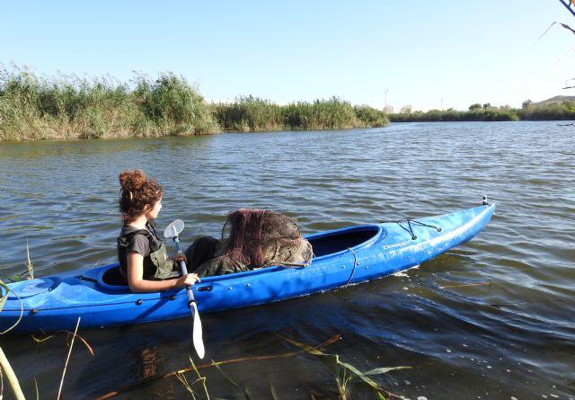 Preocupación por la situación de la anguila europea en cauces y humedales del Sureste Ibérico - 3, Foto 3