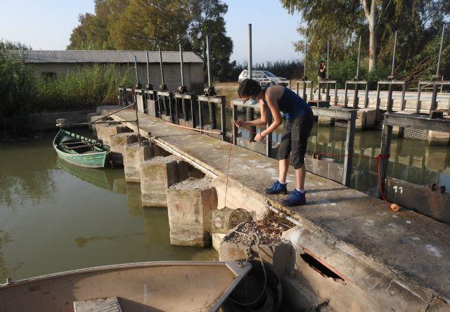 Preocupación por la situación de la anguila europea en cauces y humedales del Sureste Ibérico - 4, Foto 4