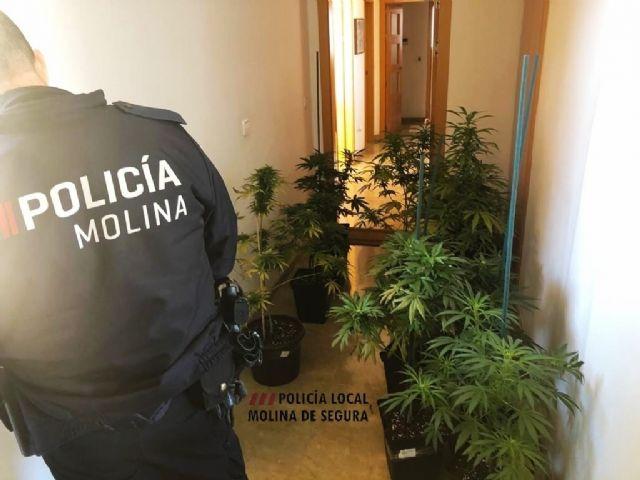 La Policía Local de Molina de Segura detiene a una persona por cultivo de marihuana tras quejas vecinales por el olor - 1, Foto 1