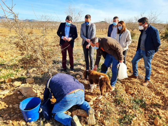 Los buenos resultados de los cultivos experimentales de trufa negra abren una nueva alternativa a la agricultura de Caravaca - 1, Foto 1