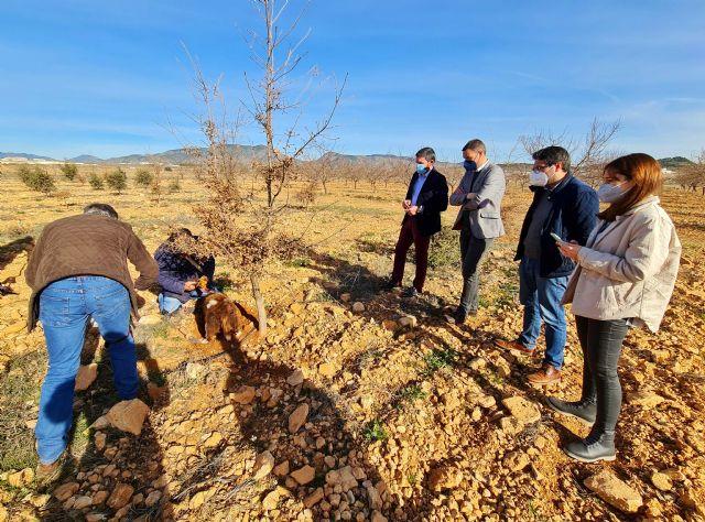 Los buenos resultados de los cultivos experimentales de trufa negra abren una nueva alternativa a la agricultura de Caravaca - 4, Foto 4