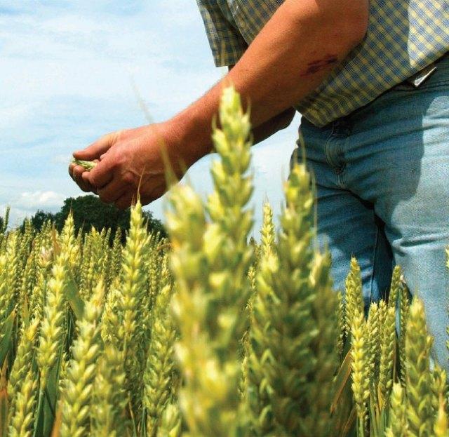 Fundación Ingenio preside el encuentro virtual ´La Agricultura del Futuro: producir más con menos´ - 1, Foto 1