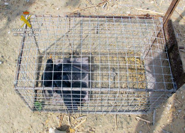 La Guardia Civil se incauta de 26 jaulas- trampa para conejos de campo - 2, Foto 2