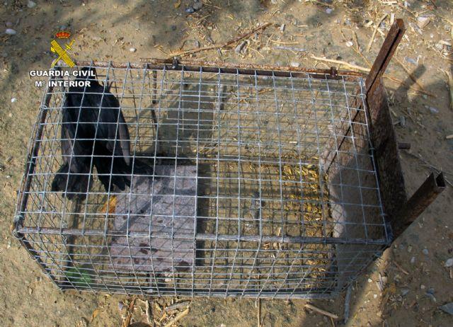 La Guardia Civil se incauta de 26 jaulas- trampa para conejos de campo - 3, Foto 3