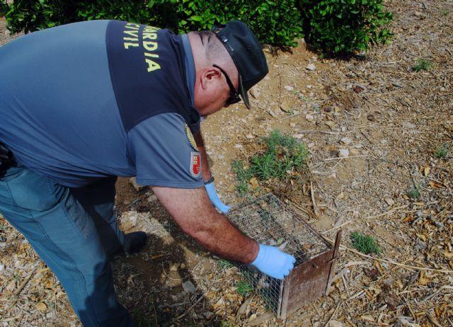 La Guardia Civil se incauta de 26 jaulas- trampa para conejos de campo - 5, Foto 5
