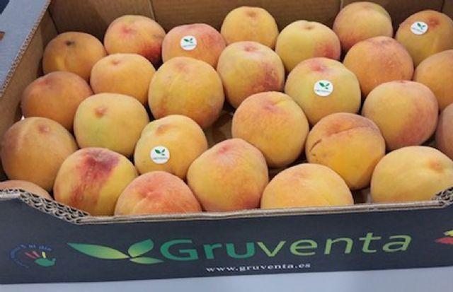 """Destacan la """"gran calidad"""" de la campaña hortofrutícola de verano aunque apuntan una gran pesadez comercial en los mercados - 1, Foto 1"""