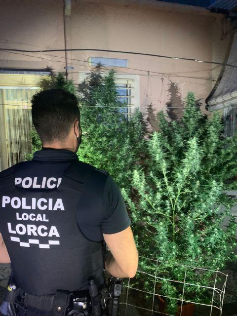 La Policía Local de Lorca incauta cinco plantas de marihuana en dos viviendas de los barrios de San Pedro y de San Juan - 1, Foto 1