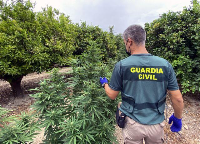 La Guardia Civil desmantela un clan familiar que cultivaba marihuana en una finca de Fortuna - 1, Foto 1