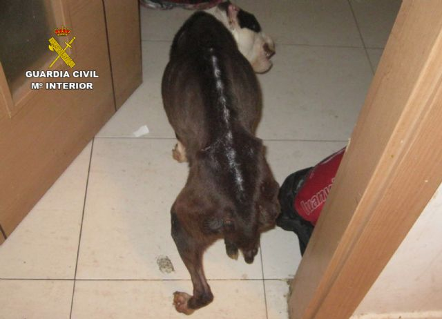 La Guardia Civil investiga a un vecino de Alhama de Murcia por abandono de animales domésticos - 1, Foto 1