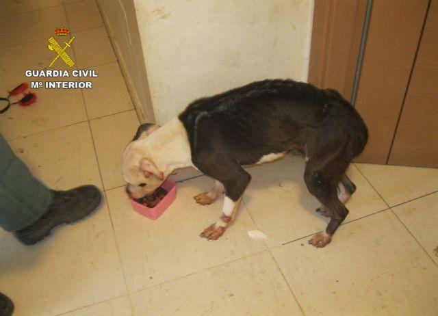 La Guardia Civil investiga a un vecino de Alhama de Murcia por abandono de animales domésticos - 2, Foto 2