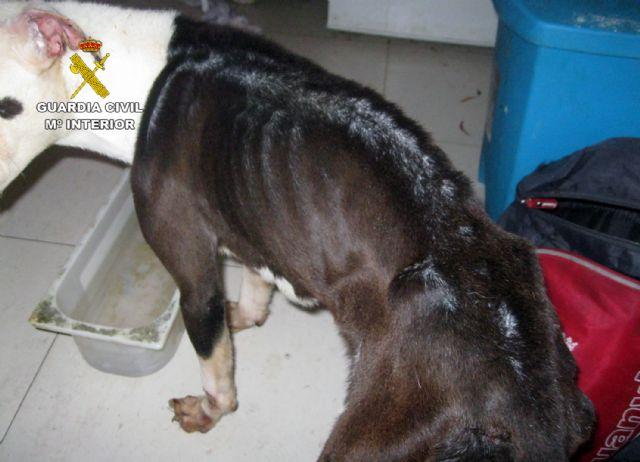 La Guardia Civil investiga a un vecino de Alhama de Murcia por abandono de animales domésticos - 3, Foto 3