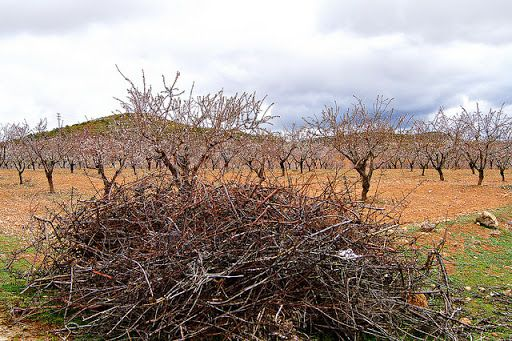 El Ayuntamiento habilitará un punto junto al Ecoparque para que los agricultores puedan llevar sus podas agrícolas - 1, Foto 1