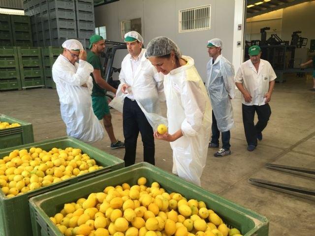 Agricultura inspecciona almacenes de c tricos para for Enfermedades citricos fotos
