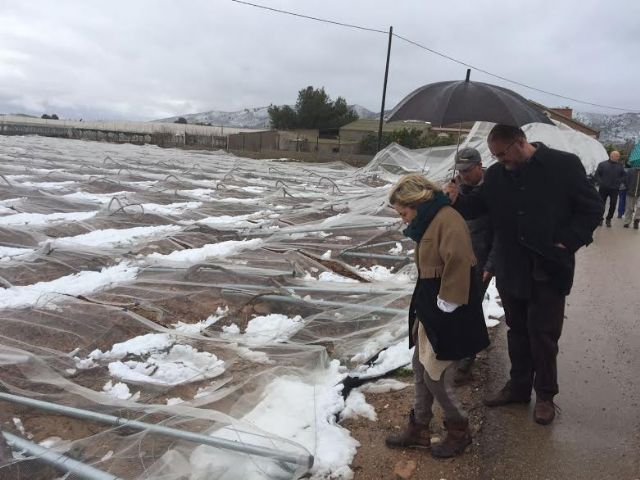 The Minister of Agriculture and the mayor of Totana visit the table grape vineyards damaged in El Raiguero by the snow storm