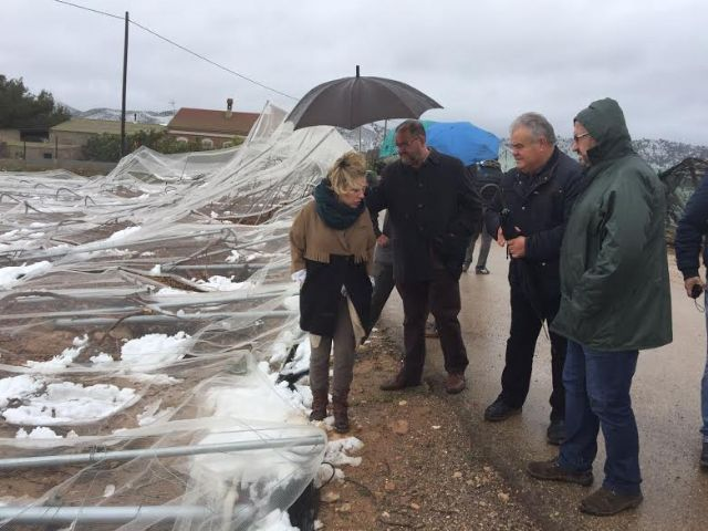 The Minister of Agriculture and the mayor of Totana visit the table grape vineyards damaged in El Raiguero by the snow storm, Foto 2