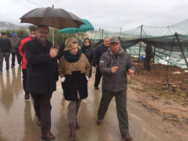 The Minister of Agriculture and the mayor of Totana visit the table grape vineyards damaged in El Raiguero by the snow storm, Foto 4