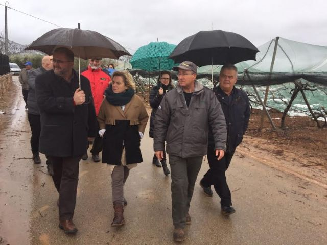 The Minister of Agriculture and the mayor of Totana visit the table grape vineyards damaged in El Raiguero by the snow storm, Foto 7