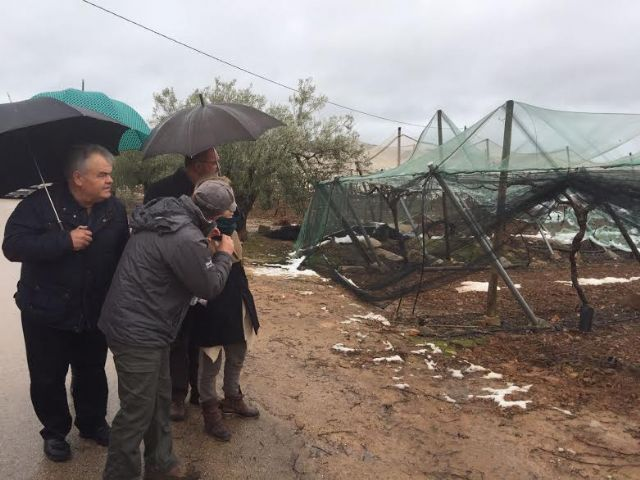 The Minister of Agriculture and the mayor of Totana visit the table grape vineyards damaged in El Raiguero by the snow storm, Foto 8