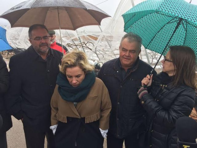 The Minister of Agriculture and the mayor of Totana visit the table grape vineyards damaged in El Raiguero by the snow storm, Foto 9