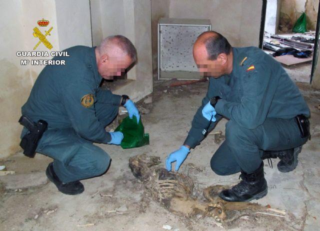 La Guardia Civil investiga a un vecino de Fortuna por la muerte violenta de cuatro galgos - 2, Foto 2