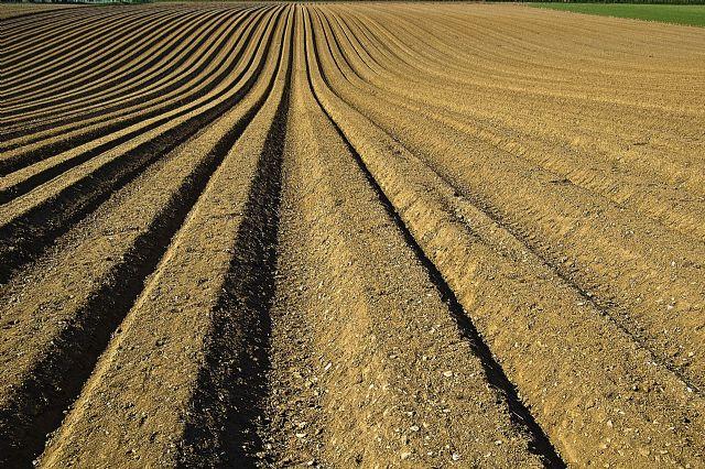 Unión de Uniones pide revisar los derechos sobre variedades vegetales y eliminar la prisión para usos no comerciales - 1, Foto 1