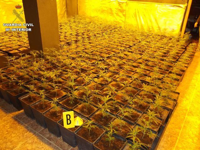 La Guardia Civil incauta 2.054 plantas de Cannabis sativa - 1, Foto 1