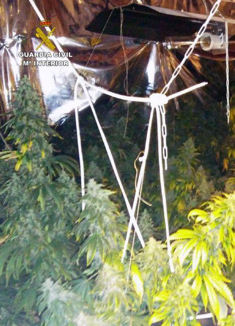 La Guardia Civil desmantela en Pliego una plantación indoor de marihuana - 2, Foto 2
