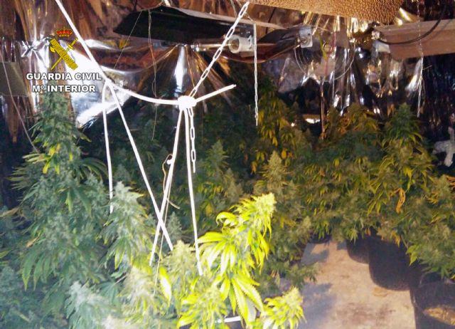 La Guardia Civil desmantela en Pliego una plantación indoor de marihuana - 5, Foto 5