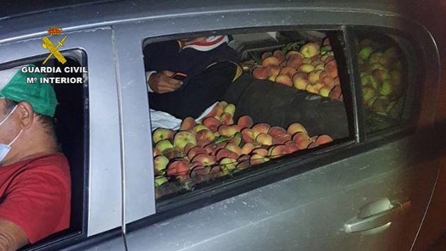 La Guardia Civil recupera más de media tonelada de melocotones en Cieza - 2, Foto 2