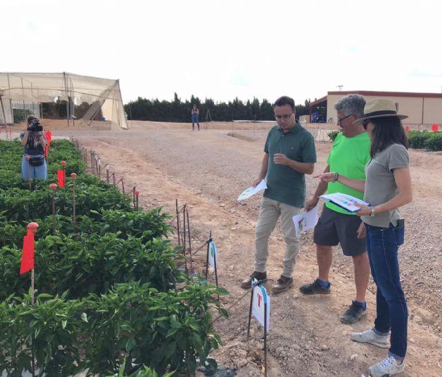 Presentan en Murcia los primeros resultados de su ensayo en pimiento - 1, Foto 1