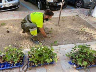 Más de 240.000 nuevas plantas arbustivas para crear perímetros verdes en los parques y jardines del municipio - 2, Foto 2