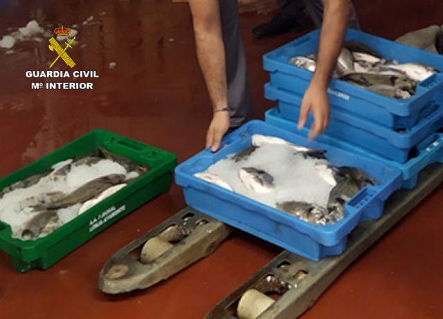 La Guardia Civil sorprende a un vecino de Cartagena con más de 50 kilos de doradas capturadas ilícitamente - 4, Foto 4