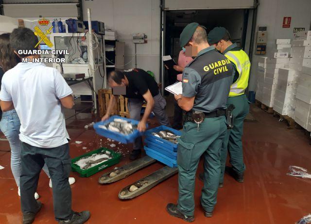 La Guardia Civil sorprende a un vecino de Cartagena con más de 50 kilos de doradas capturadas ilícitamente - 5, Foto 5