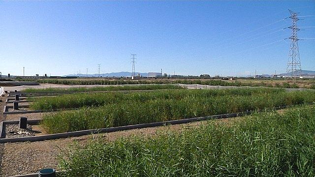 Cefusa y la UPCT avanza en el tratamiento de purines convirtiéndolos en fertilizante y agua para riego, Foto 1
