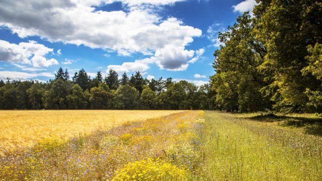 BASF se compromete a impulsar la agricultura sostenible en Europa a través de objetivos concretos - 1, Foto 1