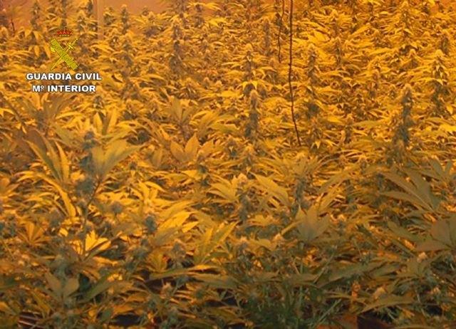 La Guardia Civil desmantela un invernadero clandestino de marihuana en Fortuna - 1, Foto 1