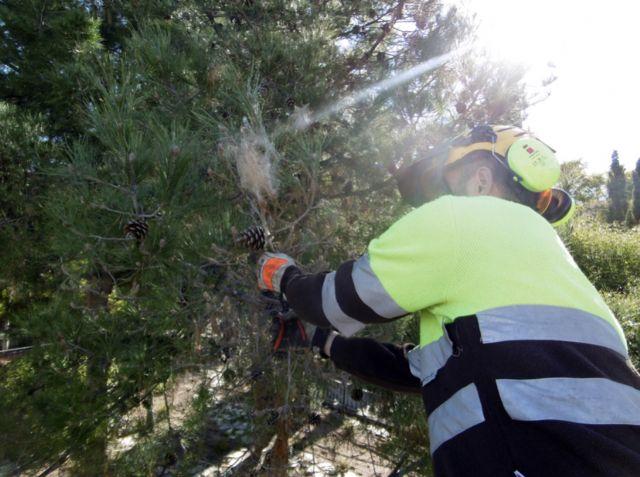 El Ayuntamiento protege sus más de 2.500 pinos con técnicas de lucha biológica y endoterapia - 1, Foto 1