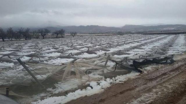 La Comunidad Autónoma organiza una charla informativa para dar cuenta de las ayudas a los cultivos dañados por la nieve, Foto 1