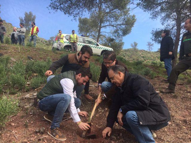 La Consejería de Cultura se suma a la plantada de árboles organizada con motivo del Festival WAM - 1, Foto 1