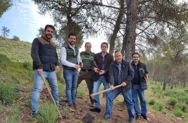 La Consejería de Cultura se suma a la plantada de árboles organizada con motivo del Festival WAM - 2, Foto 2