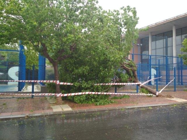 Protecci�n Civil atiende seis incidencias importantes durante el episodio de lluvias, Foto 2