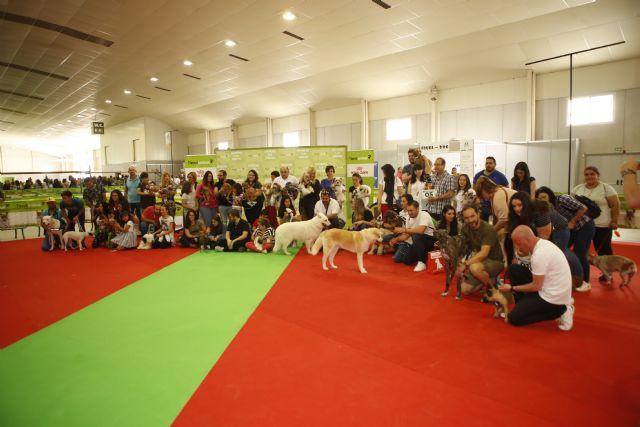 Balance  exposición canina y salón mascota - 1, Foto 1